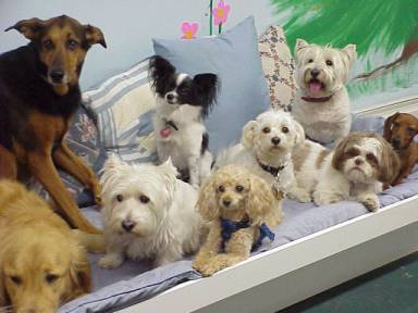 Click Here for Doggie Day Care